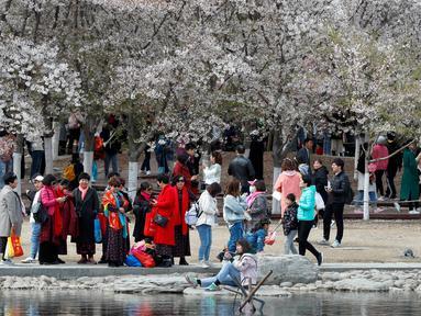 Sekelompok wanita menikmati bunga sakura selama festival musim semi di Taman Yuyuantan, Beijing, China, Sabtu (30/3). Pengunjung memadati taman yang memiliki lebih dari 2.000 pohon sakura ini. (AP Photo/Andy Wong)