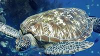 Waktu yang tepat untuk menikmati keindahan bawah laut Taman Nasional Bunaken mulai Mei hingga Agustus (dok.instagram/@ayoketamannasional_official/https://www.instagram.com/p/CNWas3wg2oS/Komarudin)