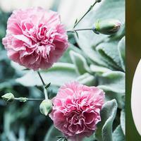 Pilihan Bunga Berdasarkan Bulan Kelahiran dan Makna Rahasia di Baliknya. Sumber foto: Document/The Good Housekeeping.