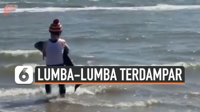 Seekor bayi lumba-lumba ditemukan terdampar di sebuah pantai yang tak diketahui lokasinya. Beruntung, ada seorang wanita yang berhasil menyelamatkan bayi lumba-lumba tersebut.