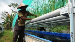 Warga merawat tanaman padi IR 64 dengan menerapkan teknologi hidroganik di RW 012, Pengasinan, Depok, Jawa Barat, Senin (15/2/2021). Warga Kompleks Perumahan Bumi Sawangan Indah secara swadaya mengembangkan tanaman padi dengan teknologi hidroganik sejak bulan Oktober. (merdeka.com/Arie Basuki)