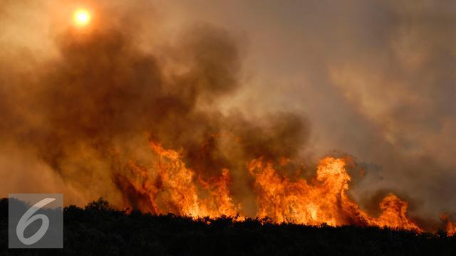 20151019-Ilustrasi-Kebakaran-Hutan
