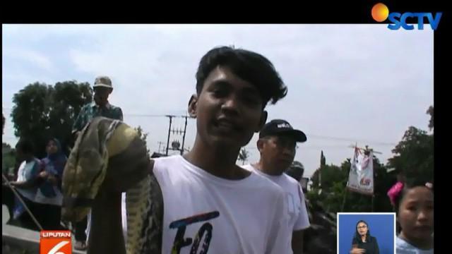 Sebenarnya ini bukan kali pertama warga mendapatkan ular sanca saat Kali Ulu banjir.