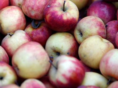 Apel sangat baik untuk kesehatan mulut. Buah ini dapat membantu mengurangi plak gigi. (AFP Photo)