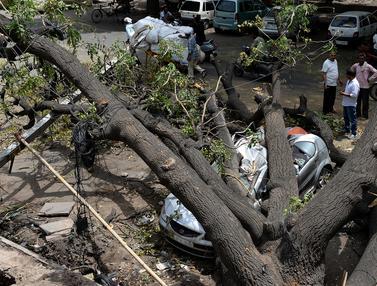 Diterjang Badai Angin, Pohon Tumbang Timpa Mobil di India