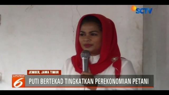 Silaturahmi ke para petani pisang di Jember, Jawa Timur, Cawagub Jawa Timur, Puti Guntur Soekarno berjanji akan meningkatkan perekonomian para petani tersebut.