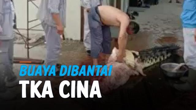 TKA CINA BANTAI BUAYA DI AREA PERTAMBANGAN KONAWE