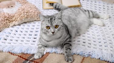 Bulu Kucing Lagi Rontok, Ini Cara Efektif Membersihkannya!