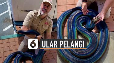 Pecinta reptil ini menunjukkan ular piton yang memiliki warna unik karena memiliki warna seperti pelangi.