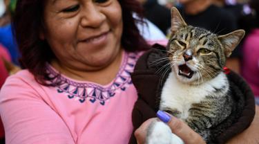 Seorang wanita membawa kucing peliharaannya untuk diberkati di Gereja San Pablo Ermitano, Mexico City, Meksiko (22/1). Santo Anthony dikenal sebagai santo pelindung hewan peliharaan. (AFP Photo/Ronaldo Schemidt)