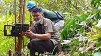 Personel BBKSDA Riau memasang kamera pengintai di lokasi konflik harimau sumatra dengan manusia. (Liputan6.com/Dok BBKSDA Riau)