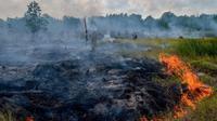 Suasana lahan gambut yang dilalap api di Pekanbaru, Provinsi Riau, (1/2). Lokasi ini merupakan salah satu dari 73 titik api yang terdeteksi menyebabkan kabut asap di pulau Sumatera. (AFP Photo/Wahyudi)