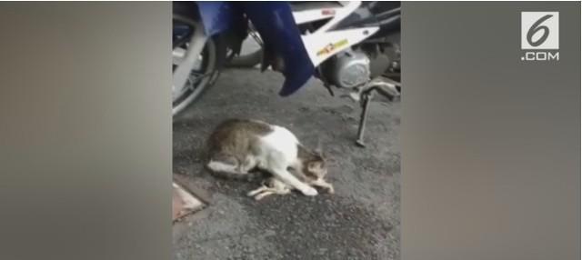 Seekor anak kucing mati setelah disiram air panas karena dianggap mengambil ikan di restoran.