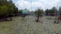 Tumpahan minyak di Teluk Balikpapan. (Liputan6.com/ Abelda Gunawan)
