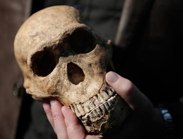 20170512- Manusia Purba- Homo Naledi Hominin-AFP