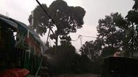 Pohon tumbang di Bogor, Sabtu (26/10/2019). (Liputan6.com/ Achmad Sudarno)