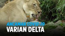 covid macan