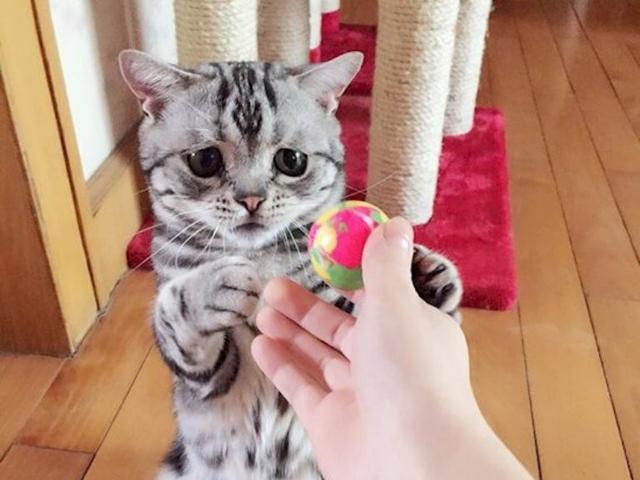 Gratis Ayo Ramai Ramai Mensterilkan Kucing Health Liputan6 Com