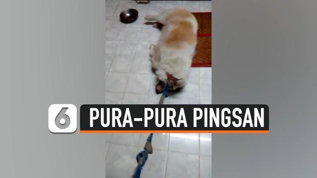 PURA-PURA PINGSAN