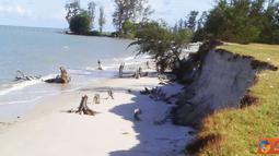 Citizen6, Bangka Belitung: Akibat pencurian besi pemecah ombaak, lahan sekitar pantai terkena abrasi kurang lebih sejauh 15 meter, dan terjadi longsoran tanah sekitar tiga meter. (Pengirim: Muhamad Fatih)