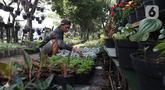 Pedagang menata tanaman hias yang dijual di Juanda, Depok, Jawa Barat, Senin (6/7/2020). Menurut pedagang, penjualan berbagai jenis tanaman hias saat ini mengalami peningkatan sekitar 50 persen. (Liputan6.com/Herman Zakharia)