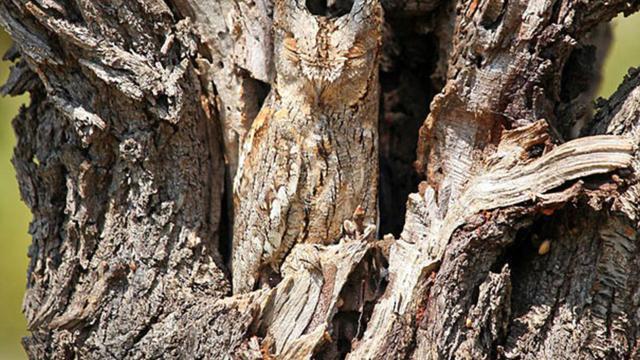 Download 58 Foto Gambar Burung Hantu Di Pohon HD Paling Unik Free