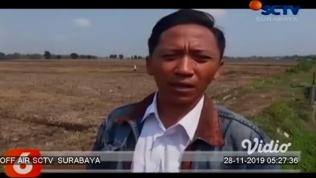 Warga di Kabupaten Jombang, Jawa Timur, digegerkan dengan temuan mayat wanita tanpa busana di tengah sawah. Tak ditemukan kartu identitas pada jasad korban. Petugas kepolisian masih melakukan penyidikan untuk mengetahui penyebab tewasnya korban.