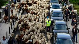 Kawanan domba dan kambing digiring menuju pusat kota Madrid pada Minggu (20/10/2019). Para gembala Spanyol menggiring sekitar 2.000 domba ke jalan-jalan untuk melindungi hak menggembala, migrasi dan menggiring ternak yang semakin terancam oleh perluasan permukiman. (OSCAR DEL POZO / AFP)