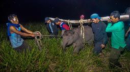 Petugas medis Balai Besar Konservasi Sumber Daya Alam (BBKSDA) Provinsi Riau mengevakuasi seekor anak gajah sumatera liar yang terluka di Siak, Riau, Rabu (16/10/2019). BBKSDA Riau harus mengevakuasi satwa dilindungi itu ke Pusat Pelatihan Gajah di Minas untuk perawatan selanjutnya. (WAHYUDIE/AFP)