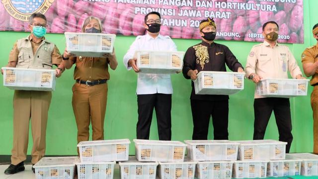 Pelepasan ekspor 30 ton ibu jalar oleh Gubernur Jabar Ridwan Kamil, Direktur Aneka Kacang dan Umbi Kementan Amirudin Pohan dan Bupati Bandung Dadang Supriatna. (Dok Kementan)