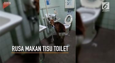 Seekor rusa ditemukan di dalam toilet umum, tengah memakan tisu.