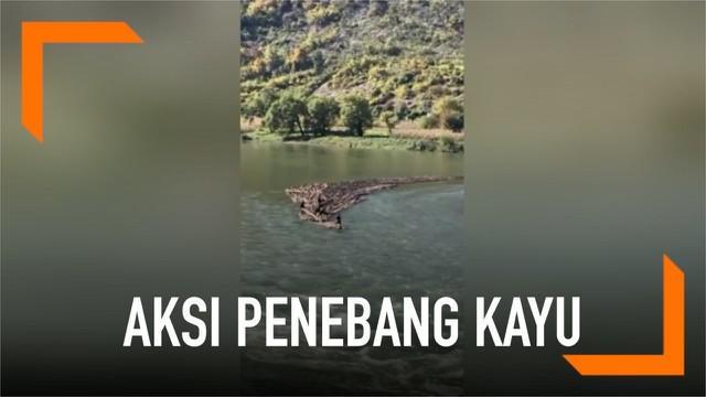 Sejumlah penebang kayu di Kota Baishan membawa hasil tebangannya dengan cara unik. Mereka mengikat tumpukan kayu menjadi rakit kemudian membawanya menyusuri sungai.