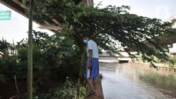 Pungki (53) memeriksa tanaman perkebunan di kolong Tol Becakayu, Kalimalang, Jakarta, Kamis (4/6/2020). Jenis tanaman yang ditanam di kebun ini mulai dari bunga, sayuran, hingga buah yang hasil panennya dapat dinikmati siapa saja. (merdeka.com/Iqbal S. Nugroho)