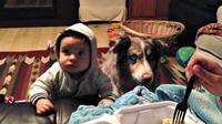 "Lucunya, bayi keluarga Gioavanini itu malah cemburu melihat anjing yang berhasil menyebut kata ""mama"" terlebih dahulu."