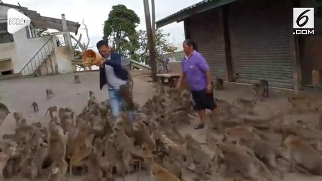 Niat awal ingin memberi makan seekor monyet, Turis asal Vietnam ini malah diserbu puluhan monyet.