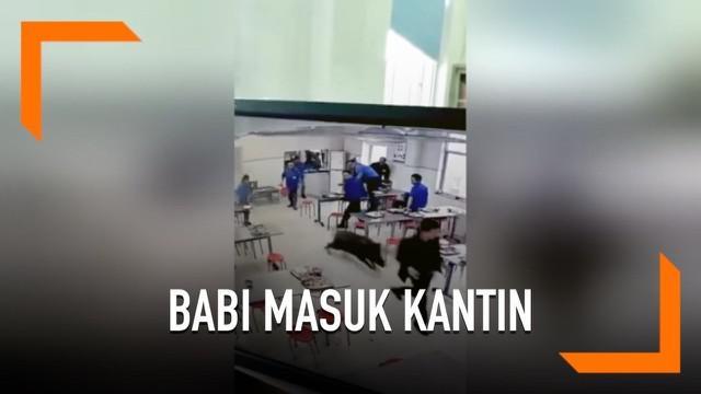 Diduga kelaparan dan mencari makanan, seekor babi hutan masuk ke kantin karyawan di thailand. Hewan tersebut akhirnya ditangkap dan dibunuh karena mengigit seorang warga.