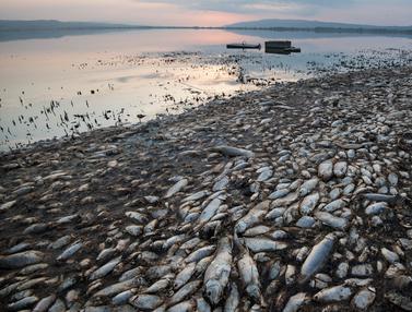 Penampakan Puluhan Ribu Ikan Mati di Danau Koroneia Yunani
