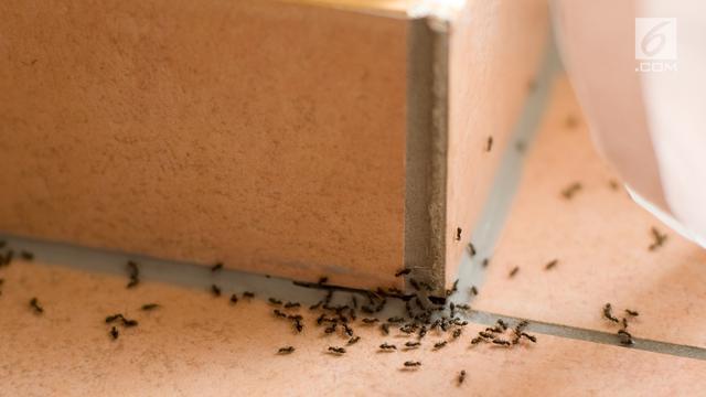 Ilustrasi Serangga