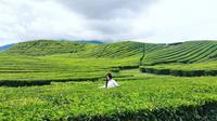Kebun teh ini merupakan yang tertua di Indonesia dan tertinggi kedua di dunia. Doc: https://www.instagram.com/pesonakerinci (@pesonakerinci)