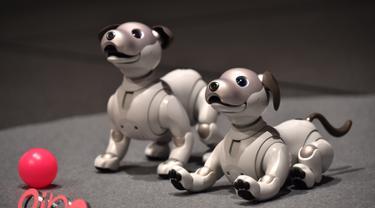 Robot anjing keluaran Sony yang bernama Aibo ditampilkan saat konfrensi pers di Tokyo, Jepang (1/11). Setelah lama berhenti, Sony memutuskan untuk kembali memproduksi robot hewan peliharaan ikoniknya dengan model yang lebih baru. (AFP Photo/Kazuhiro Nogi)