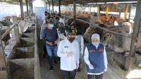 Gubernur Jawa Timur (Jatim) Khofifah Indar Parawansa mengunjungi dua peternakan sapi di Desa Pilanggot, Desa Wonokromo, Kecamatan Tikung, Kabupaten Lamongan, Jatim. (Foto: Liputan6.com/Dian Kurniawan)
