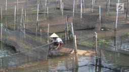 Peternak memanen ikan hias jenis memphis di Situ Telaga Biru yang airnya menyusut di Desa Parigi Mekar, Bogor, Kamis (8/8/2019). Saat musim kemarau, debit kedalaman air yang berkurang dari ketinggian 2,5 meter menjadi 1,2 meter menyebabkan petani budidaya merugi hingga 50 persen. (merdeka.com/Arie B