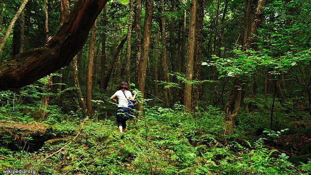 Ini 5 Hutan Paling Angker dan Mengerikan di Dunia - Global
