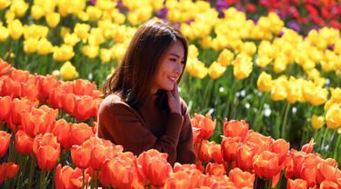 Seorang wanita berpose di antara bunga tulip selama Tesselaar Tulip Festival di Silvan, Dandenong Ranges, Melbourne (27/9). Pengunjung antusias melihat lebih dari satu juta warna-warni bunga, termasuk 900.000 tulip. (AFP Photo/William West)