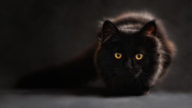Lucu, Merasa Diteror Kucing Hitam, Wanita Lapor Polisi