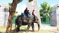Di Maharani Zoo tiap orang bisa merasakan wisata edukasi berupa atraksi satwa, melukis topeng, dan pentas panggung satwa. Foto: Ana Fauziyah/ Liputan6.com.
