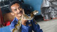Muhammad Rizal seorang ASN dari Dinas Pemadam Kebakaran dan Penanggulangan Bencana (DPKPB) Kabupaten Purwakarta, bukan hanya jago dalam memadamkan kebakaran, tetapi juga mampu menjinakkan ular. (Liputan6.com/Abramena)