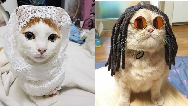6 Foto Kucing Berdandan Ini Kocak Bikin Geleng Kepala Hot Liputan6 Com