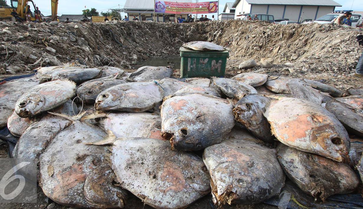 Petugas memusnahkan ikan laut yang mengandung formalin dengan cara dikubur di kawasan Pelabuhan Perikanan Muara Angke, Penjaringan, Jakarta Utara, Jumat (17/6). (Liputan6.com/Immanuel Antonius)