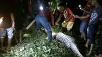 Heboh penemuan ular piton dengan perut berisi manusia yang dilahap hidup-hidup. Berikut videonya. (Via: Liputan6.com/Eka Hakim).